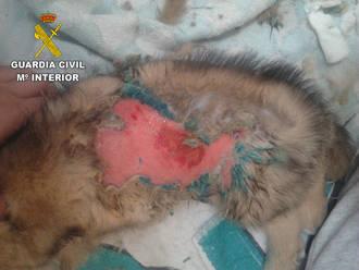 La Guardia Civil detiene a una persona en Uceda por maltrato animal