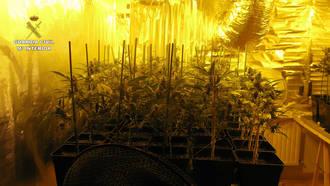 La Guardia Civil desmantela un laboratorio dedicado al cultivo de marihuana en Alovera