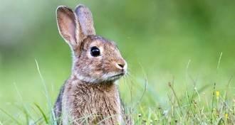"""El Gobierno regional debe actuar """"con urgencia"""" contra la plaga de conejos, según Asaja"""