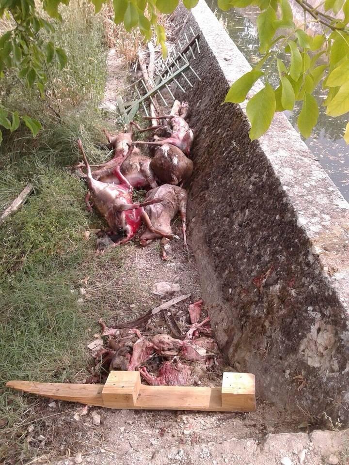 Más de 20 animales muertos aparecen en el río que abastece a Mirabueno