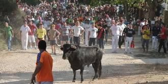 El toro de 600 kilos que se escapó en el Encierro de Brihuega ya ha sido abatido