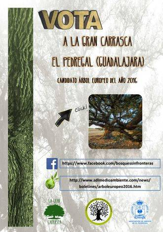 El Pedregal quiere que su Gran Carrasca sea el Árbol Europeo del año 2016