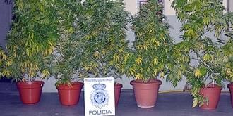 Un joven 'pillado' con plantas de marihuana en su terraza, cerca de un colegio