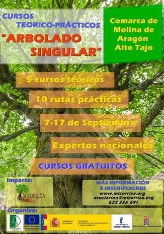 Cinco cursos sobre 'Arbolado Singular' arrancan en la Comarca de Molina de Aragón-Alto Tajo este mes de septiembre