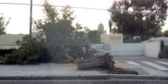 El viento deja su huella en la capital durante una tremenda tormenta