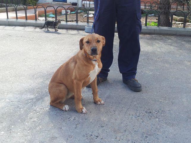Ecologistas en Acción desconfía de la perrera de la Mancomunidad Vega del Henares