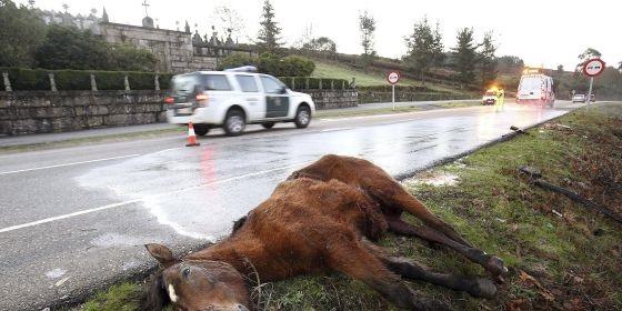 Guadalajara, líder nacional en accidentes de tráfico por culpa de animales