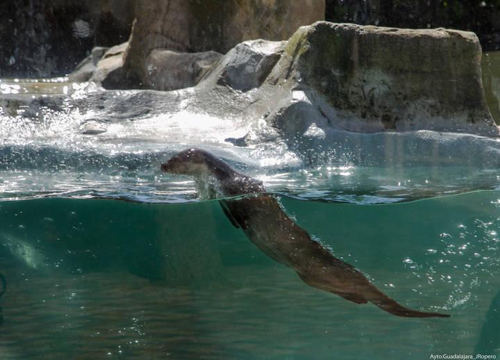 Cerca de 10.000 escolares han visitado el Zoo de Guadalajara en lo que va de año