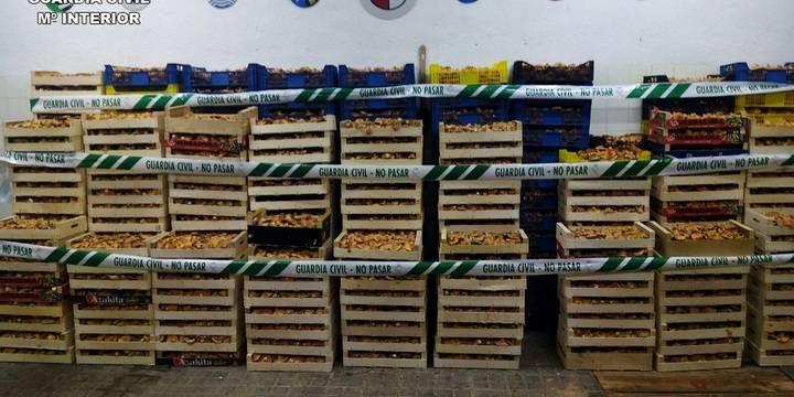 La Guardia Civil denuncia a 42 personas por comerciar con níscalos sin autorización en Guadalajara