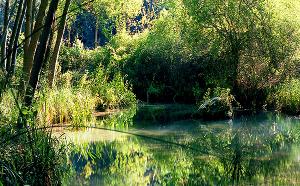 Responsabilizan a Page de la tala indiscriminada de cientos de árboles en el Parque Natural del Río Dulce