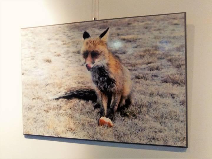 El mundo animal sin artificios en la Sala de Exposiciones del Centro Cultural de Valdeluz