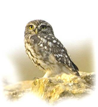 El Ayuntamiento trabaja en el establecimiento de una ruta ornitológica en la ZEPA de Quer