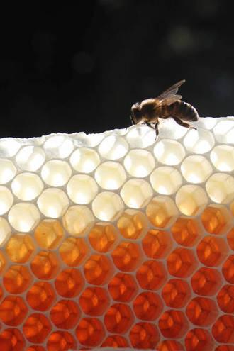 Fotógrafos de catorce países han enviado ya sus trabajos al concurso apícola de Azuqueca