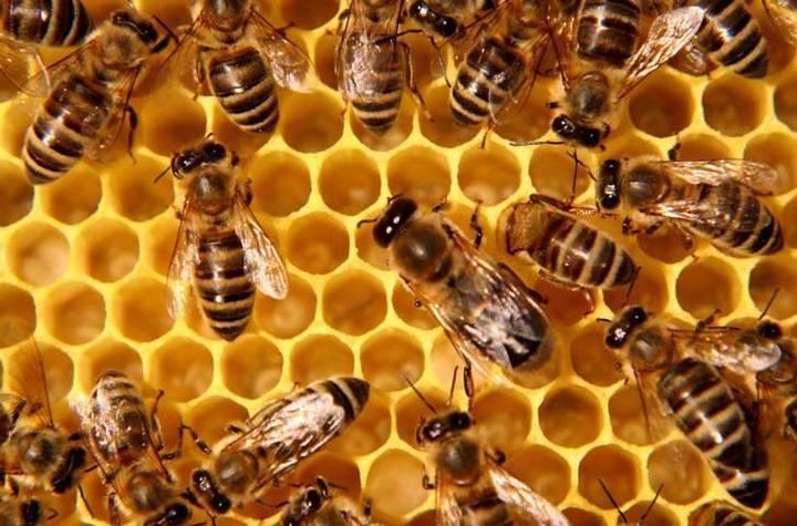 """""""Año catastrófico"""", es lo que auguran para las abejas de la provincia de Guadalajara"""
