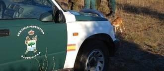 Detenido por matar una vaca a cuchilladas tras atacarla antes con perros en Guadalajara