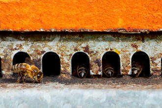 'Revisión de retaguardia', de Lucía Raso, gana el XVI Concurso Internacional de Fotografía Apícola