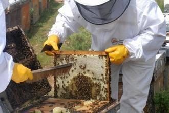 Los apicultores de Guadalajara reconocen que
