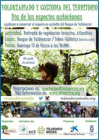 La vegetación invasora tiene los días contados en el Bosque de Valdenazar en Yebes Valdeluz