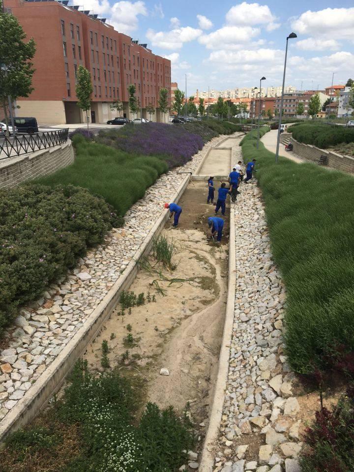 El Ayuntamiento lleva a cabo la limpieza de la lámina del agua de la avenida Juan Pablo II