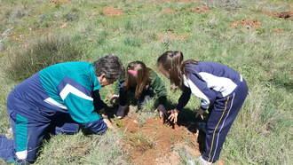 El Día del Árbol seguntino ha tenido carácter didáctico, desarrollado en varias jornadas con los centros escolares