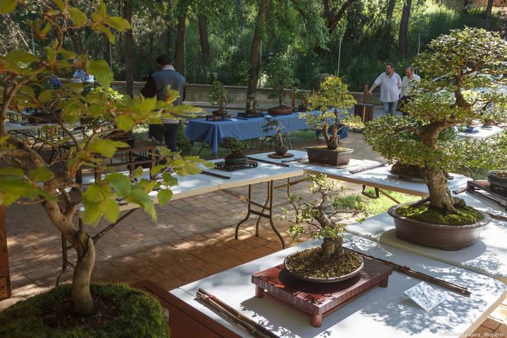 El recinto del Zoo acoge hasta el domingo una preciosa exposición de bonsais y suisekis