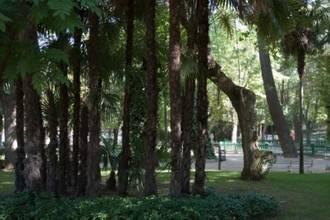 El Ayuntamiento realiza varias intervenciones por la caída de algunas ramas esta mañana