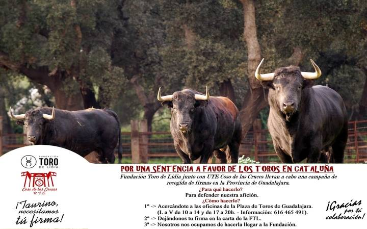 Fundación Toro de Lidia y Coso de las Cruces recogen firmas para la sentencia del TC en Cataluña