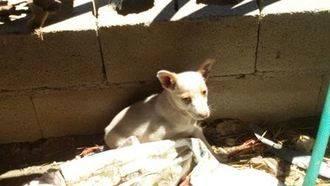 Animalistas denuncian una vez más la situación de cinco perros en una finca de Uceda