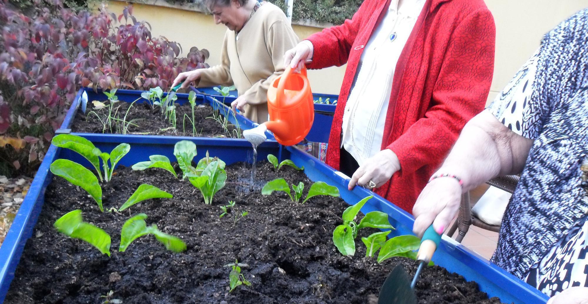 El i concurso de jardines y huertos premiar la for Huerto y jardin