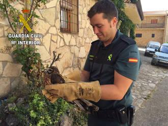La Guardia Civil recupera un ave rapaz protegida en Anguita
