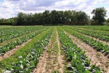 Acusan a la Junta de incumplir las resoluciones sobre agricultura ecológica