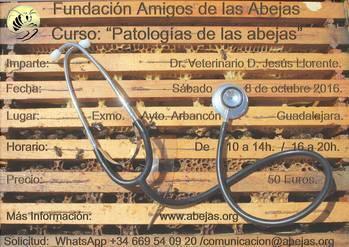 Arbancón acogerá un curso sobre las patologías de las abejas