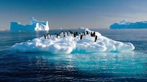 El hielo del Artico desaparecerá en el 2050