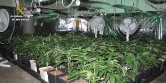 Cuatro detenidos en Cabanillas por estar cultivando 950 plantas de marihuana